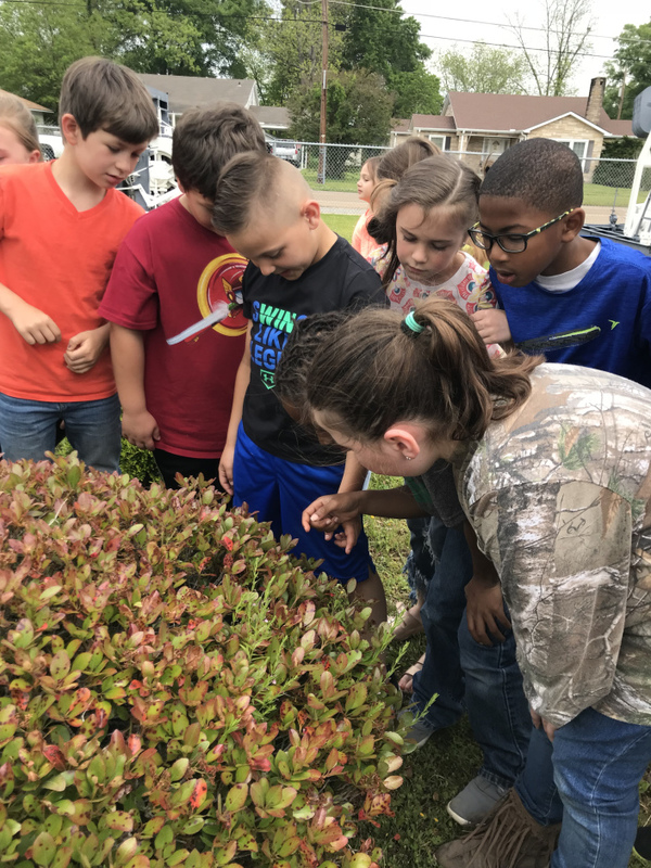 SES Students Study Butterflies
