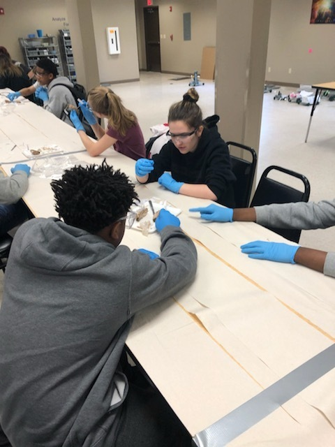 NMS Students Dissect Sheep Brains