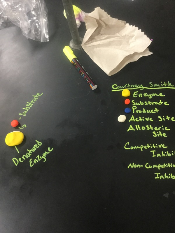 Smackover High School AP Biology Class Study Enzymes